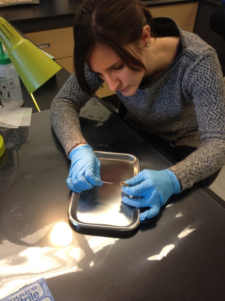 Carley Crann (A.E. Lalonde AMS Laboratory — University of Ottawa) carefully samples material from the inside cavity of the Roebuck site needle case to directly radiocarbon-date the artifact. Photo: Canadian Museum of History.