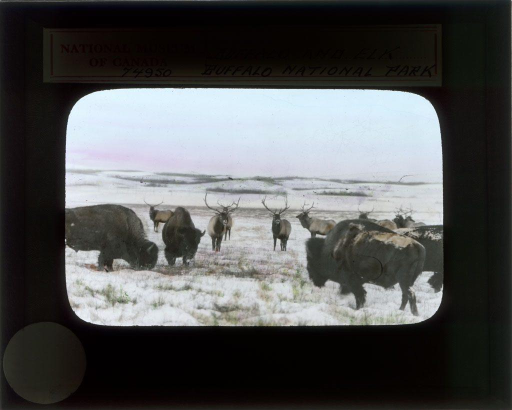Buffalo National Park