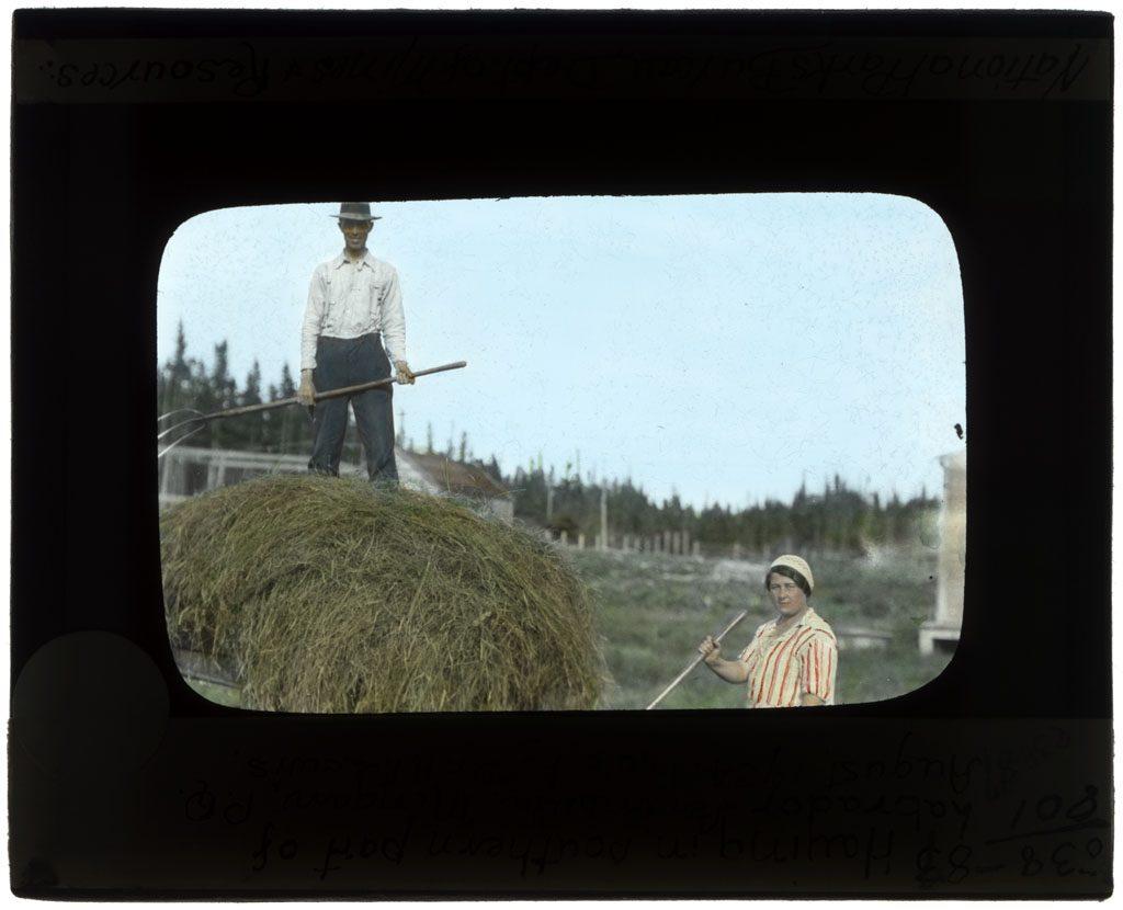 Haying in Labrador
