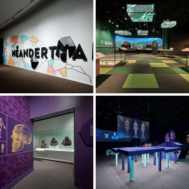 Views of the exhibition Neanderthal