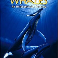 Whales :: Whales