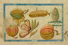 Melons and squash. Plate 45 of the Brief Discours…