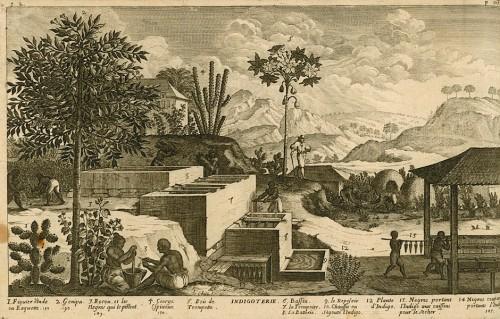 Indigo making, 1667 par Jean Baptiste Du Tertre