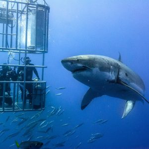 Deep cage diving