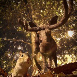 Chipmunk and moose