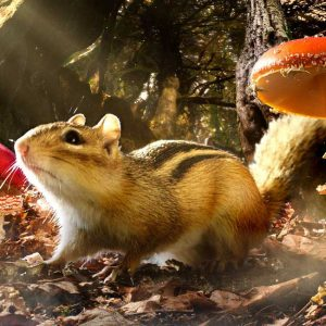Chipmunk and toadstools