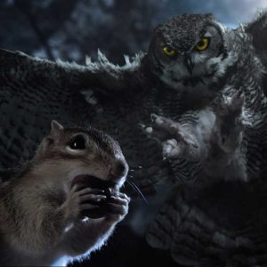 Chipmunk and owl